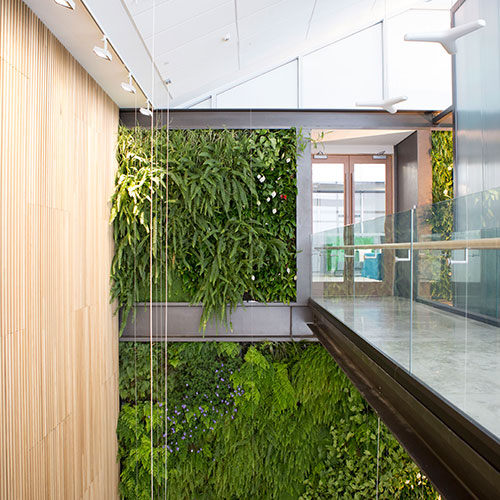Commercial Indoor Greenwall Landscaping
